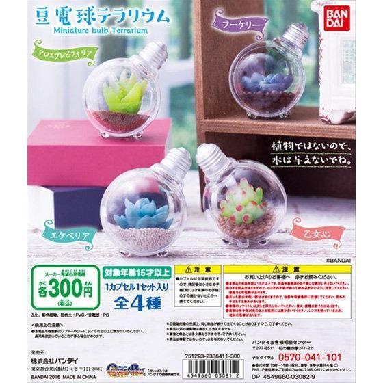 豆電球テラリウム