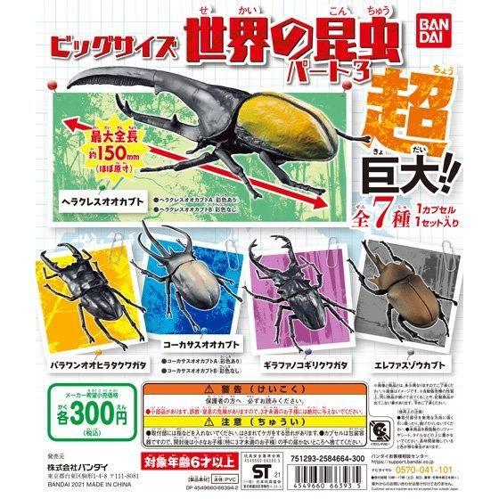 ビッグサイズ 世界の昆虫 パート3